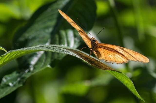 Бабочка на цветке