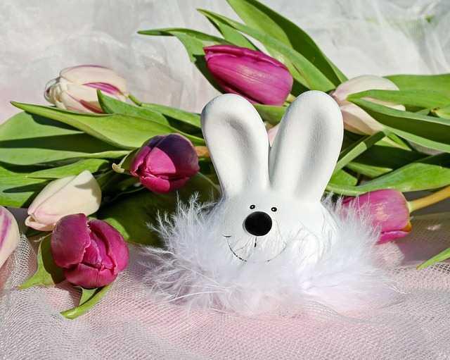Тюльпаны и кролик